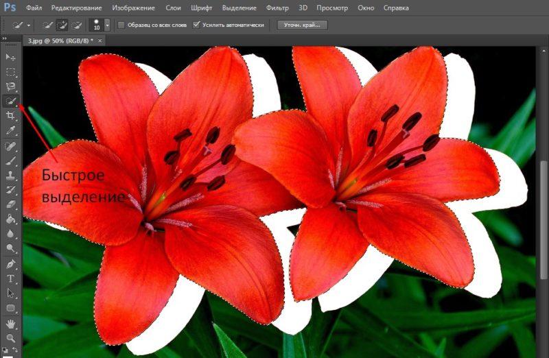 вырезать объект в фотошопе через быстрое выделение